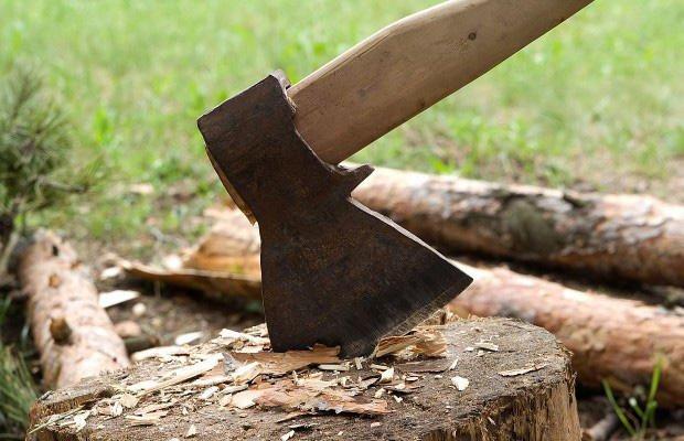 Məhəmməd Hadi küçəsində ağac kəsimi faktı aşkarlandı